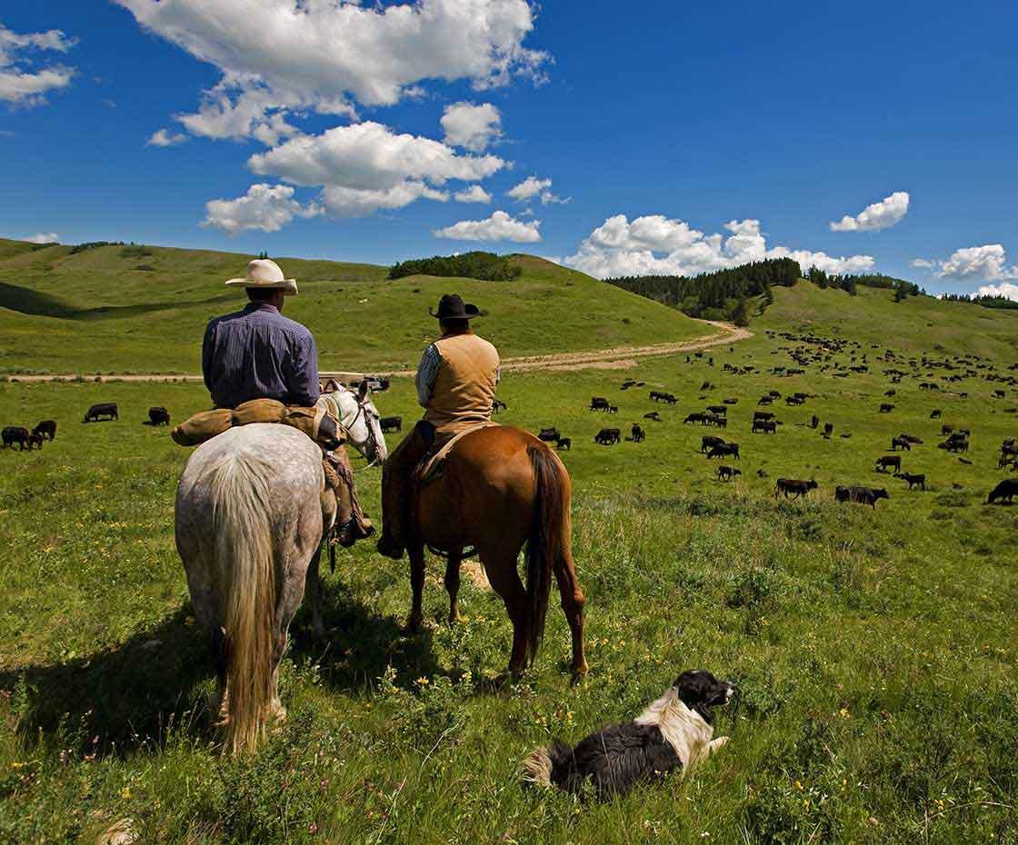Rinder Rancher in Alberta